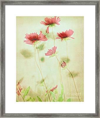 Delicate Dance Framed Print