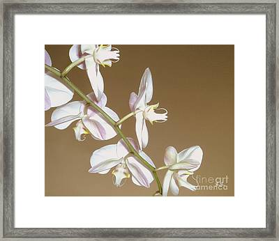 Framed Print featuring the photograph Delicate Display by Geri Glavis