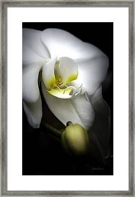 Delicate Exotic Orchid Framed Print