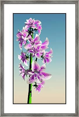Delicate Flower... Framed Print by Tim Fillingim