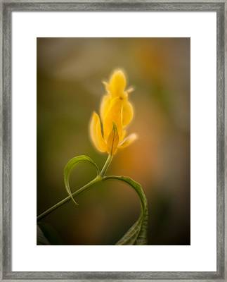 Delicate Fountain Of Gold Framed Print by Mike Reid