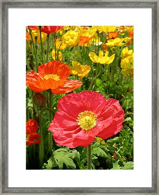 Delicate Fowers Framed Print by Pat Knieff