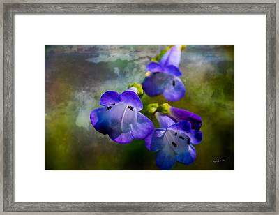 Delicate Garden Beauty Framed Print