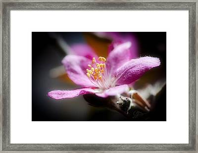 Delicate Glow Framed Print by Greg Collins