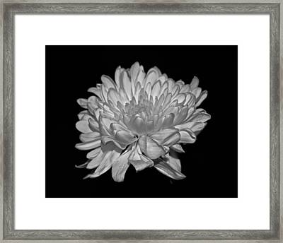 Delicate Glow Framed Print