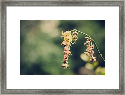 Delicate Framed Print by Heather Applegate