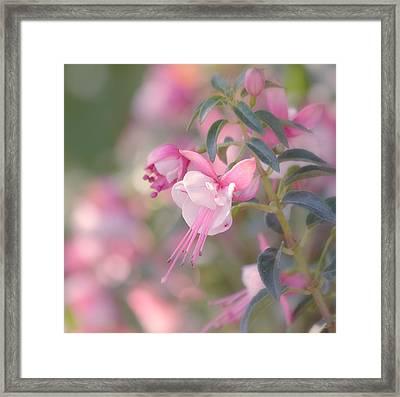 Delicate Framed Print by Kim Hojnacki