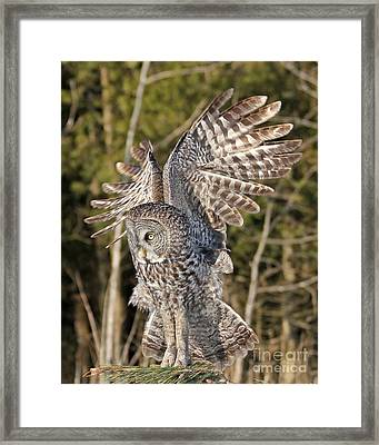 Framed Print featuring the photograph Delicate Landing  by Heather King
