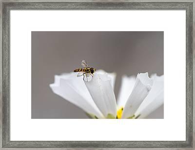 Delicate Landing Framed Print