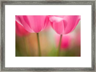 Delicate Light Of Spring Framed Print by Mike Reid