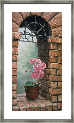 Delicate Orchids Framed Print by Lucie Bilodeau