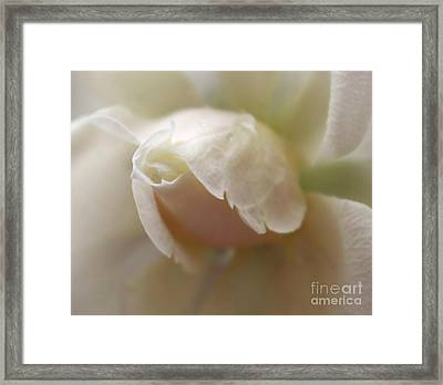 Delicate Passion Framed Print by Krissy Katsimbras