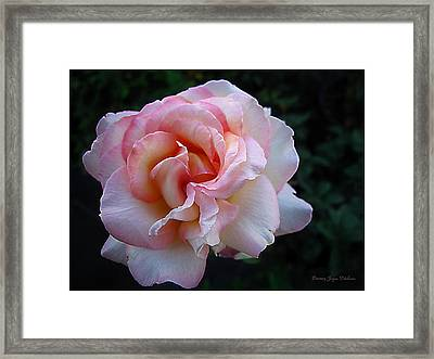 Framed Print featuring the photograph Delicate Pink by Joyce Dickens
