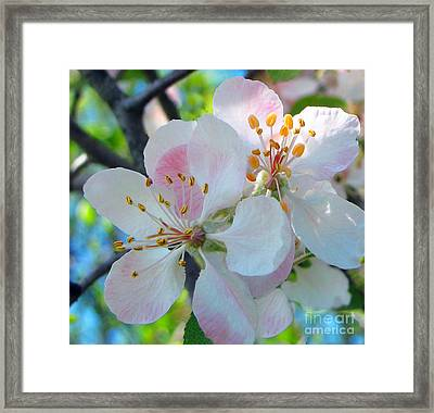 Delicate Pink's 1 Framed Print by Cedric Hampton