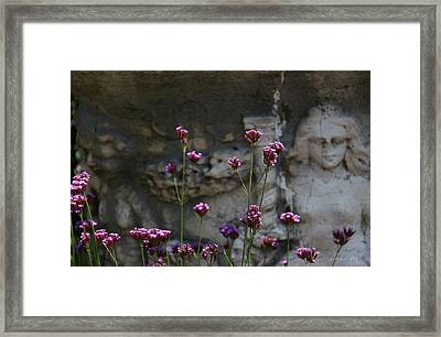 Delicate Pinks Framed Print by Yvonne Wright
