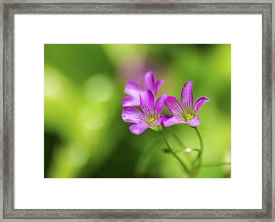 Delicate Purple Wildflowers Framed Print