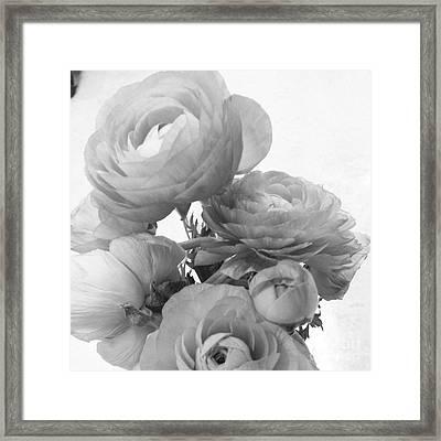 Delicate Ranunculus Framed Print