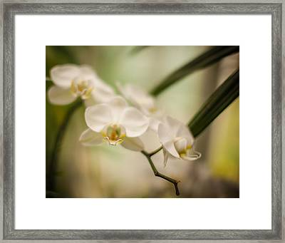 Delicate Romance Lace Framed Print by Mike Reid