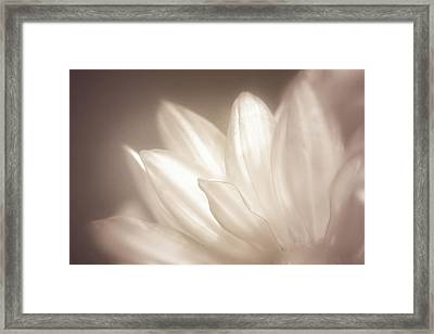 Delicate Framed Print by Scott Norris
