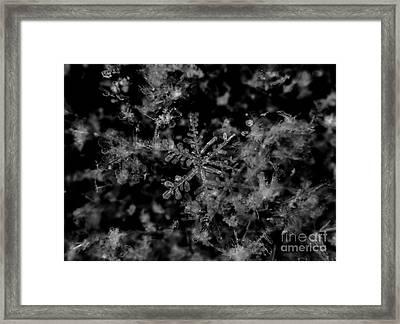 Delicate Snow Framed Print by Cheryl Baxter