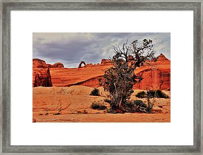Delicate Strength Framed Print by Benjamin Yeager