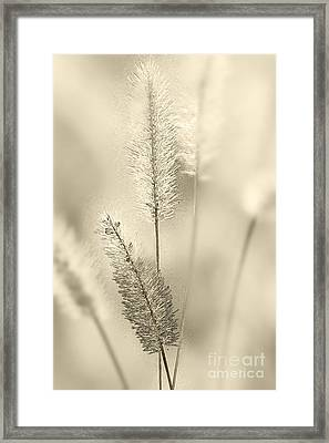 Delicate Sweetgrass Framed Print by Heiko Koehrer-Wagner