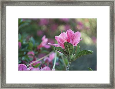 Delicate Framed Print by Toby Neal