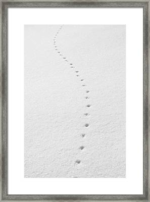 Delicate Tracks In The Snow Framed Print by Ed Cilley