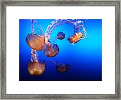 Delicate Waltz Framed Print