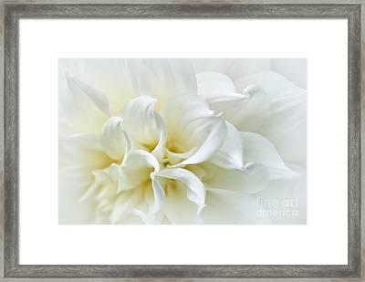 Delicate White Softness Framed Print