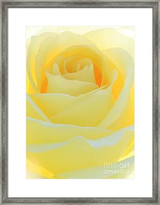 Delicate Yellow Rose Framed Print by Sabrina L Ryan