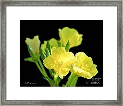 Delicate Yellow Wildflowers In The Sun Framed Print