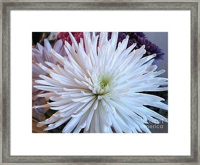 Delicate Yet Strong Framed Print by Angelia Hodges Clay