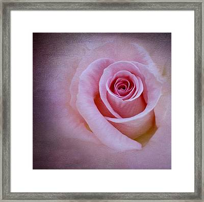 Delicately Pink Framed Print by Ivelina G