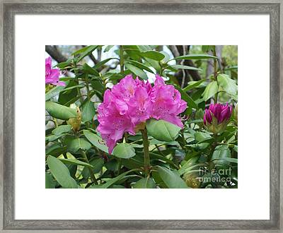 Framed Print featuring the photograph Delicate Beauty by Roberta Byram