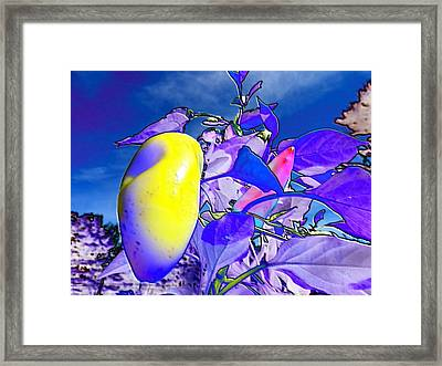 Delight Framed Print