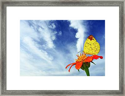Delight Framed Print by Suradej Chuephanich