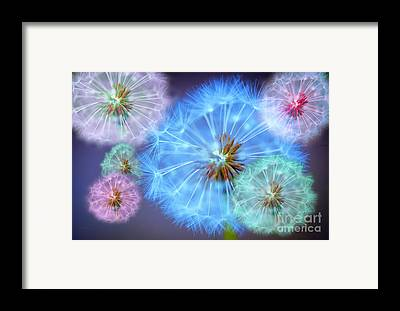 Macro Framed Prints