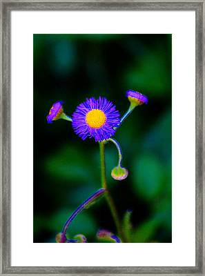 Delightful Flower Framed Print