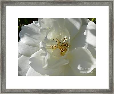 Delightful Gentility Framed Print by Anat Gerards