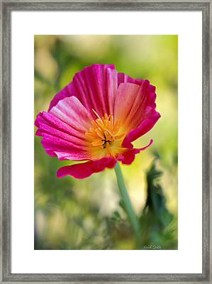 Delightful Framed Print by Heidi Smith