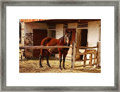 Delightful Horse Framed Print by Marcia Lee Jones