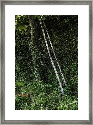 Delights Await The Adventurous Framed Print