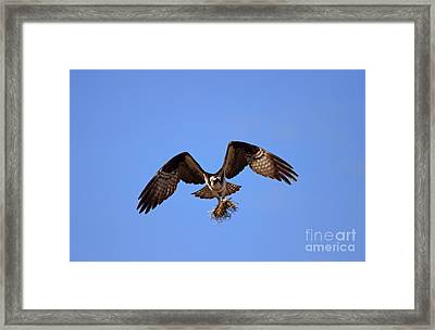 Delivery By Air Framed Print by Mike  Dawson