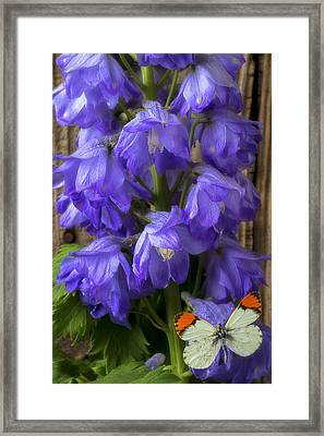 Delphinium And Butterfly Framed Print
