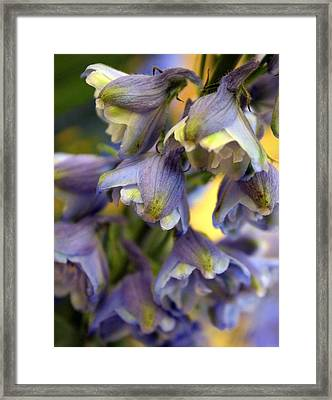 Delphinium Blue Framed Print