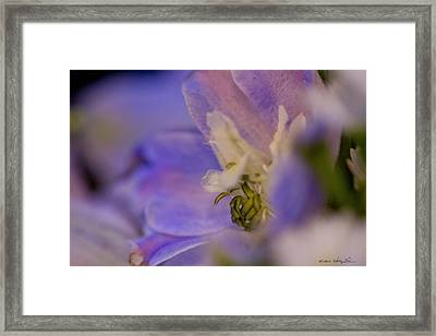 Framed Print featuring the photograph Delphinium by Kathy Ponce