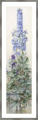 Delphiniums Framed Print by James Valentine Jelley