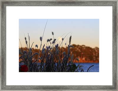 Delta Bouquet Framed Print