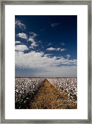 Delta Gold Framed Print by T Lowry Wilson